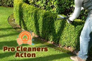 Hedge Trimming Acton